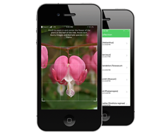 Developed Plant Recognition Mobile App for US Entrepreneur