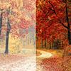 Photo Colour Correction Services