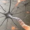 Neurology Animations