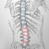 Spine Animation Services